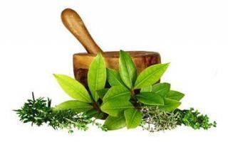 grinder with leaf